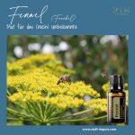ZENDOCRINE – das Öl für deinen persönlichen Neustart!